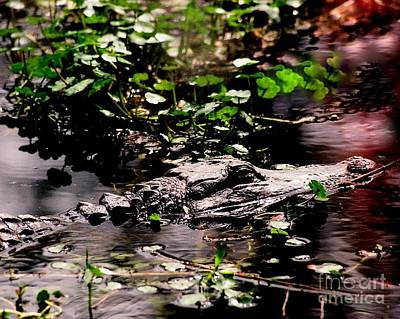 Photograph - See Ya Later Alligator by Michael Hoard