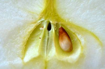 Photograph - Seed by Catherine Murton