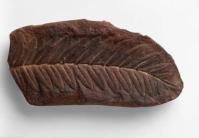 Seed Fern Fossilised In Ironstone Nodule Art Print