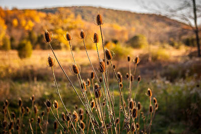 Photograph - Teasel Seed Heads Fall Foliage Sussex County New Jersey Painted   by Rich Franco