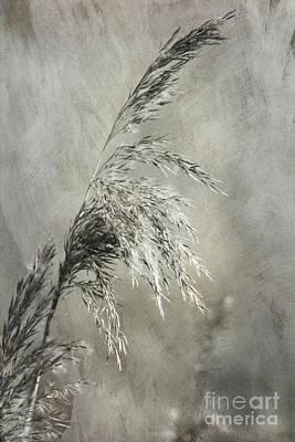 Seeded Grass Art Print