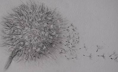 Seedhead Art Print by Anne Parker