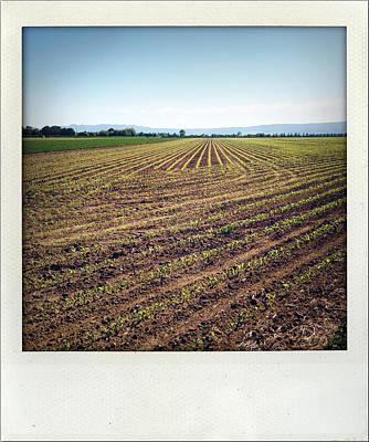 Caravaggio - Seedlings in paddock by Les Cunliffe