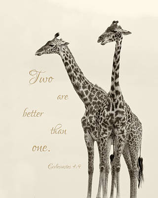 Photograph - Seeing Double - The Giraffes by June Jacobsen
