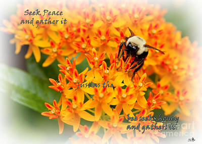 Photograph - Seek Peace  And Gather It by Sandra Clark