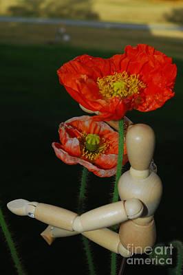 Seeking A Yellow Brick Road Poppy Number Two Art Print by Heather Kirk