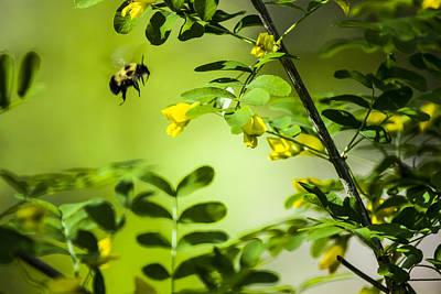 Photograph - Seeking Nectar by Albert Seger