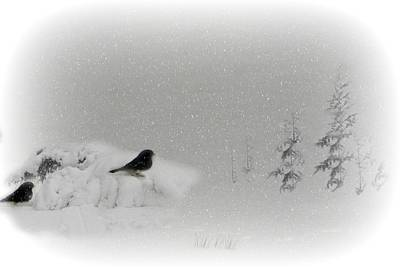 Seeking Shelter Art Print by Barbara S Nickerson