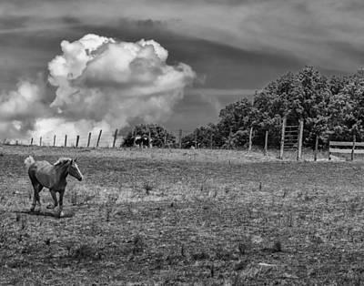 Photograph - Seeking Shelter by Richard Kopchock