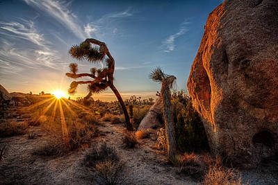 Joshua Tree Np Photograph - Seeking The Light by Peter Tellone