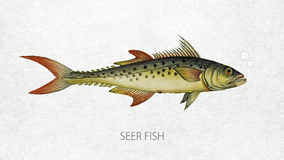 Fish Species Digital Art - Seer Fish by Aged Pixel