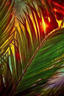 Photograph - Sego Frond Fire by Scott Campbell