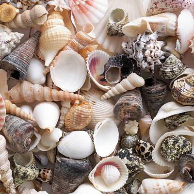 Selection Of Sea Shells Art Print by Science Photo Library