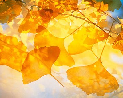Colors Of Nature Photograph - Selective Focus Close Up Of Golden by Panoramic Images