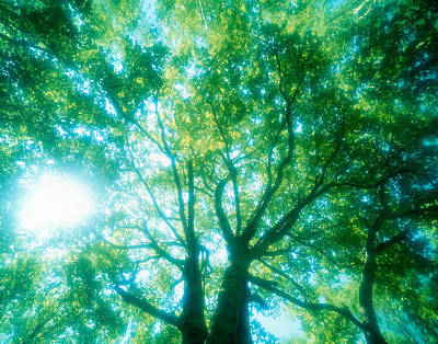Selective Focus Trees In Forest Art Print by Panoramic Images