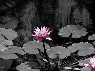 Photograph - Selective Lily by Oscar Alvarez Jr