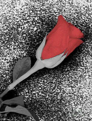 Photograph - Selective Rose by Nina Silver