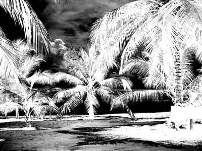 Photograph - Selling Shells Infrared Extreme by Heather Kirk