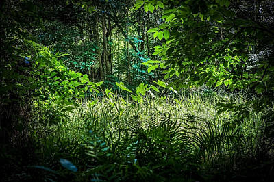 Cypress Swamp Photograph - Seminole County Florida Environmental Center Along The Florida Trail     by Rich Franco