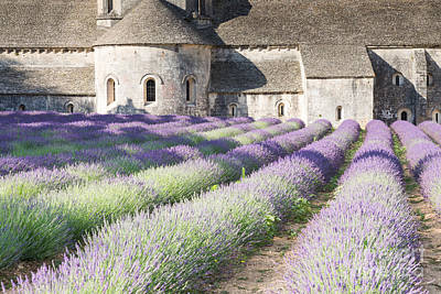 Provence Photograph - Senanque Abbey And Its Lavender Field - Provence - France by Matteo Colombo
