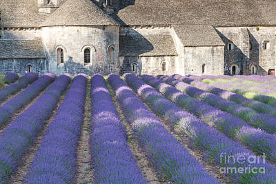 Senanque Abbey And Lavender Field - Provence France Print by Matteo Colombo