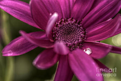 Senetti Water Droplet Art Print by Andrew Pounder