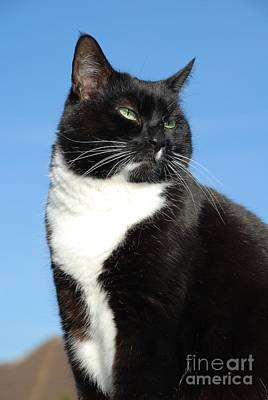 Photograph - Senior Black And White Cat by David Fowler
