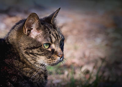 Photograph - Senior Cat by Melinda Fawver