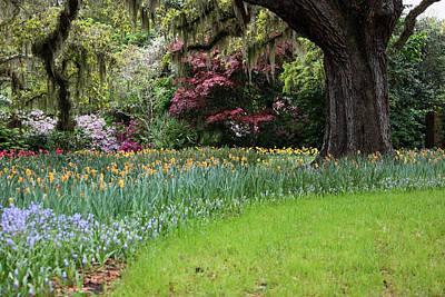 Sensational Springtime II Original by Suzanne Gaff