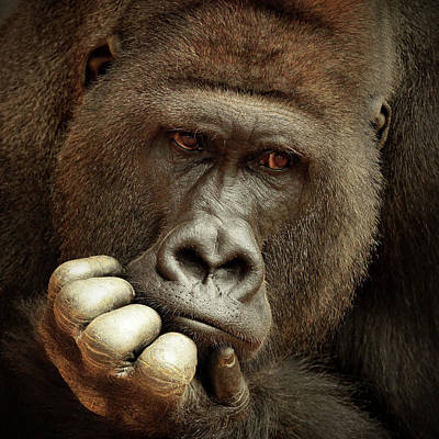 Ape Wall Art - Photograph - Sense Of Life ... by Antje Wenner-braun