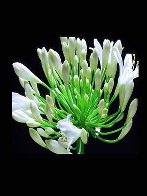 Mixed Media - Sensual Romantic Flowers by Navin Joshi