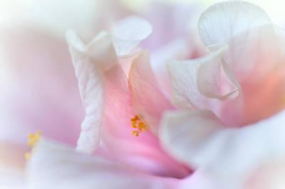 Sensuality. Peach Hibiscus. Macro Art Print by Jenny Rainbow