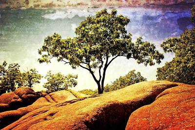 Sentinal Tree Art Print by Marty Koch