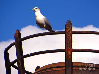 Photograph - Sentinel Sea Gull by Joy Hardee