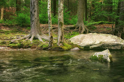 Photograph - Sentinels By The Creek by Steven Mancinelli
