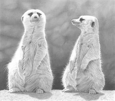 Meerkat Drawing - Sentinels by Laura Rohlfing