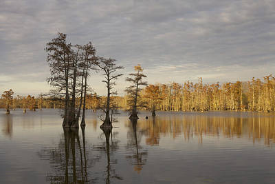 Photograph - Sentinels Of The Lake by Jane Eleanor Nicholas