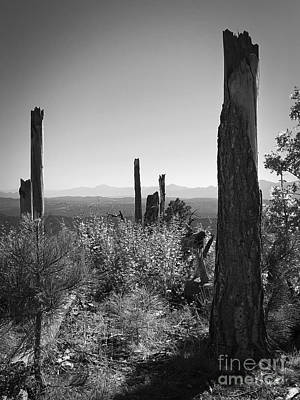 Photograph - Sentinels On The Mogollon Rim In Black And White by Lee Craig
