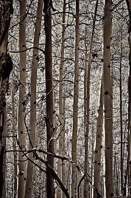 Mixed Media - Sepia Aspens by Charles Muhle