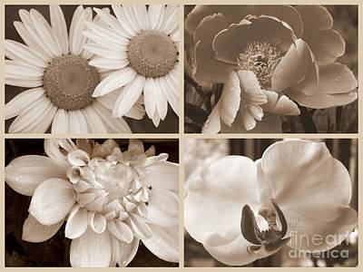 Photograph - Sepia Beauties by Eunice Miller
