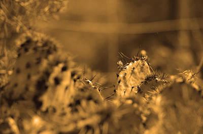 Photograph - Sepia Cacti Close Up by Deprise Brescia