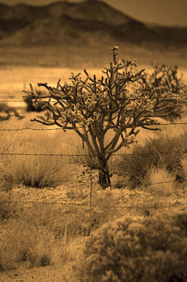 Photograph - Sepia Cacti Roadside by Deprise Brescia