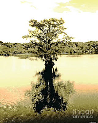 Digital Art - Sepia Cypress Chicot Sp Louisiana by Lizi Beard-Ward