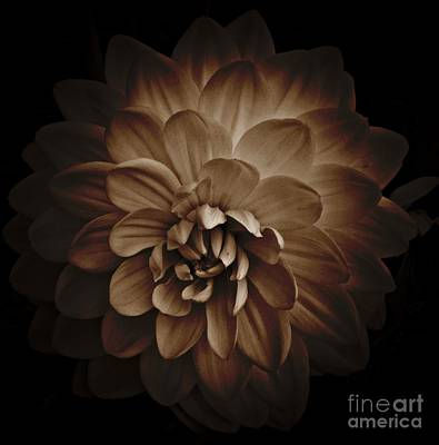 Mixed Media - Sepia Dahlia 2 by Chalet Roome-Rigdon