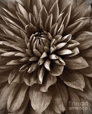 Mixed Media - Sepia Dahlia by Chalet Roome-Rigdon