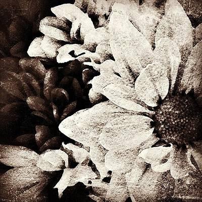 Photograph - Sepia Dahlias by Kathleen Messmer