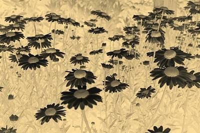 Photograph - Sepia Daisies by Tracey Harrington-Simpson