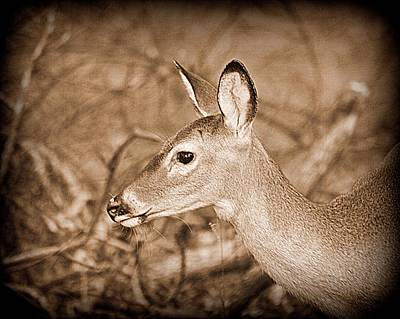 Photograph - Sepia Fall Doe by Sheri McLeroy