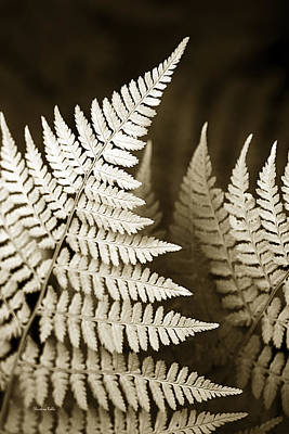 Photograph - Sepia Fern Leaf by Christina Rollo