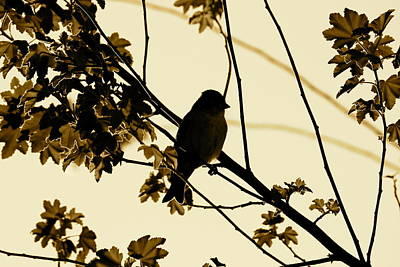 Photograph - Sepia Finch by Diana Hatcher